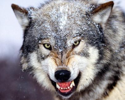 coyote_image.jpg